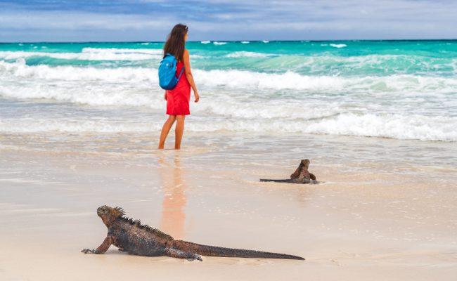 iguana tortuga